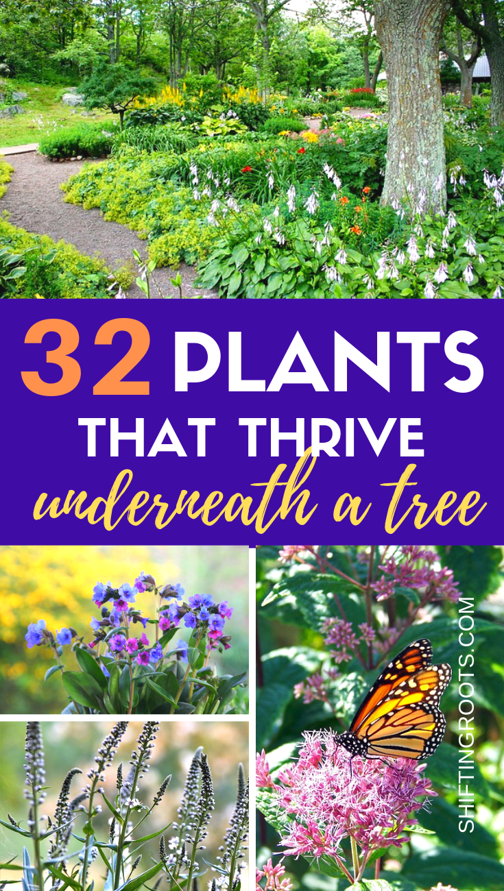 Not sure what to plant when youre landscaping under a tree Heres 32 shade friendly perennial flowers ground cover annuals and shrubs that would be beautiful in your front...