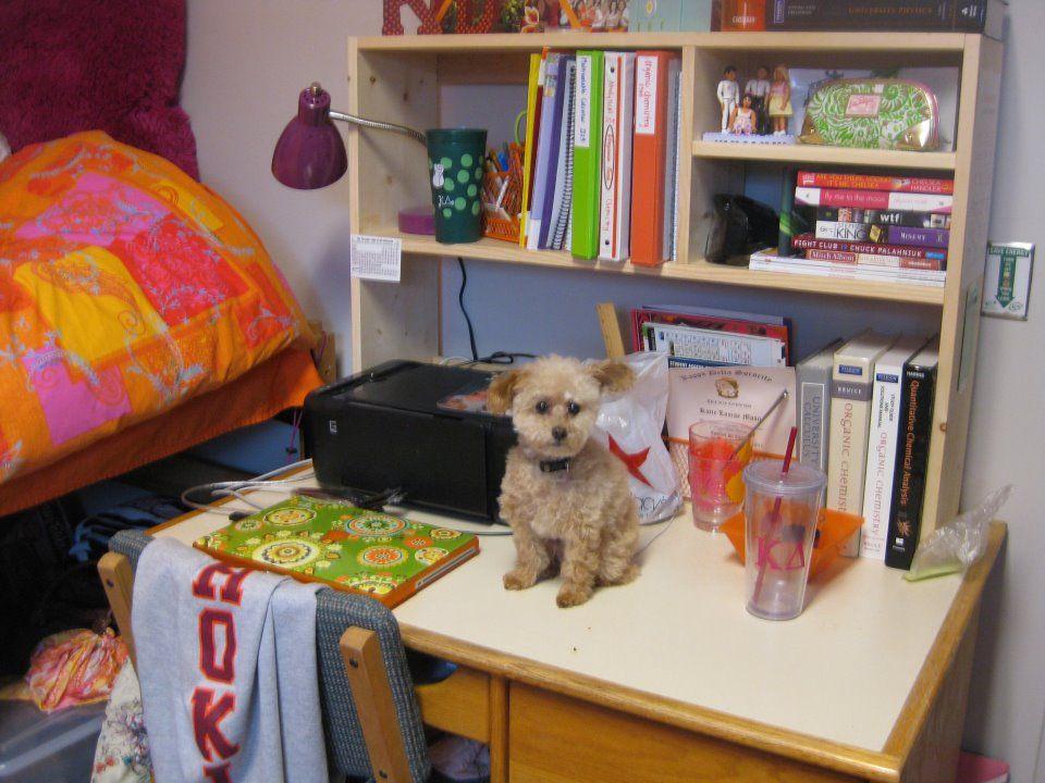 Don t for desk shelves Dorm Pinterest