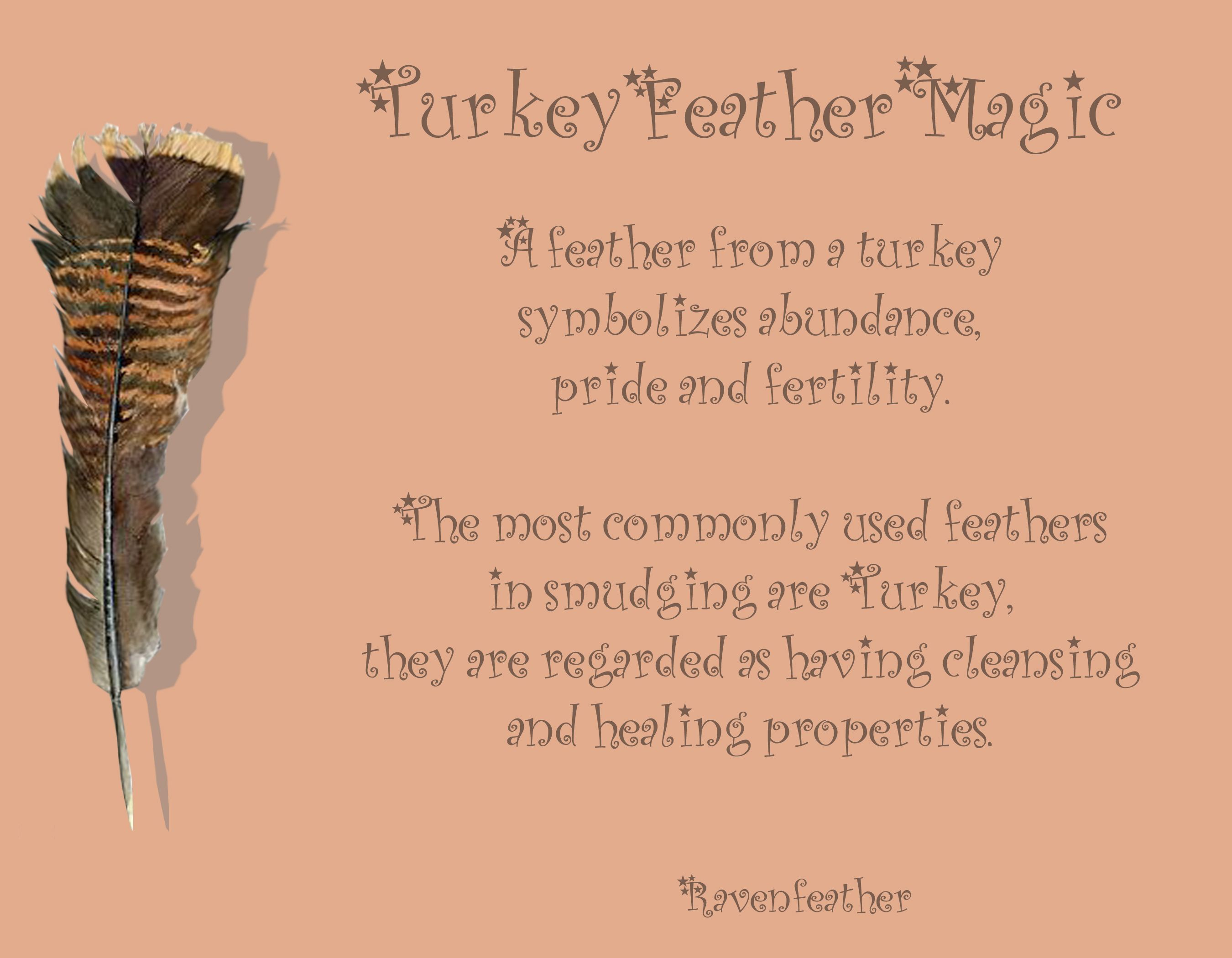Turkey Feather Magic Feather Magic Feather Meaning Book Of Shadows