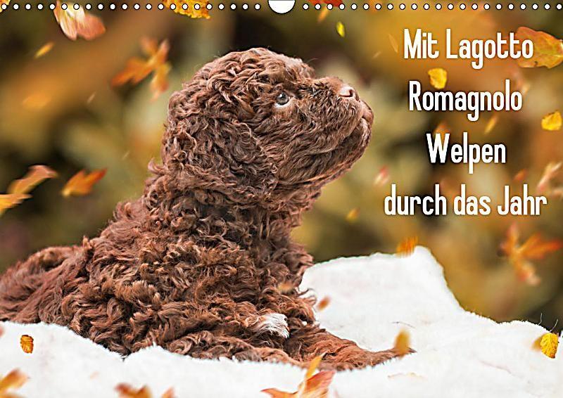 Mit Lagotto Romagnolo Welpen Durch Das Jahr Wandkalender 2020 Din A3 Quer Kalender In 2020 Welpen Niedliche Welpen Und Kalender