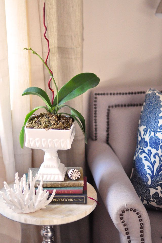How To Replant And Regrow Orchids Orchids Beautiful Orchids Orchid Flower