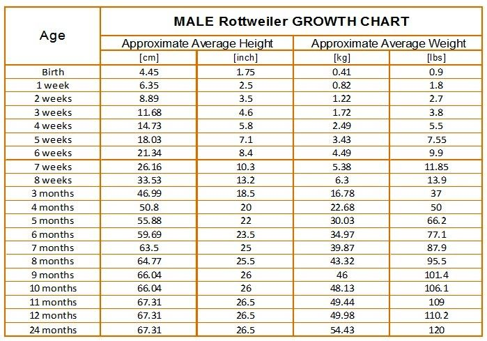 Rottweiler Growth Chart Rottweiler Rottweiler Weight Growth Chart