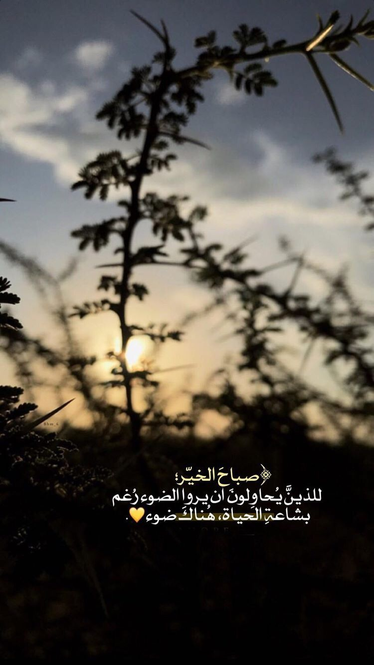 صباح الحكمة Funny Arabic Quotes Beautiful Arabic Words Photo Quotes