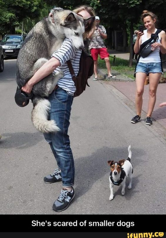 She Is Scared Of Smaller Dog Hahahaha Funny Animal Pictures Funny Animals Husky Funny