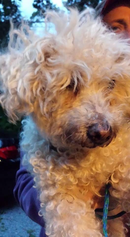 Craigslist Pets Ny Long Island