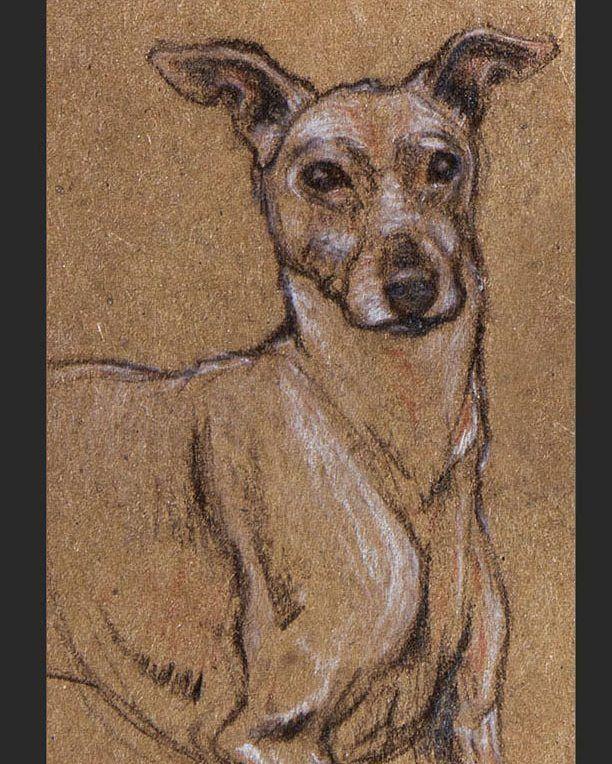 #seenunseenbook #dog #dogart #pet #petart #whippet #greyhound #italiangreyhound #sighthound #dogsofinstagram#art #sciart #illustration #animal #wildlifeart #sketch #animalart #sketchbook #drawing #nature #artwork #zoo #scienceart #womeninart #ebook #illustratedbook