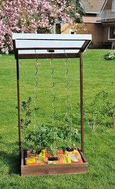 Pflanzkasten mit Rankgitter #tomatenpflanzen
