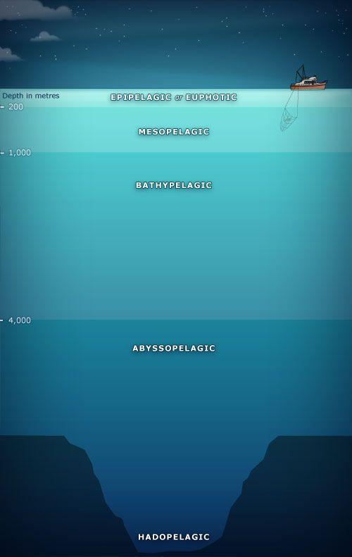 5 Depth Zones Have Been Identified In The Ocean Life Is