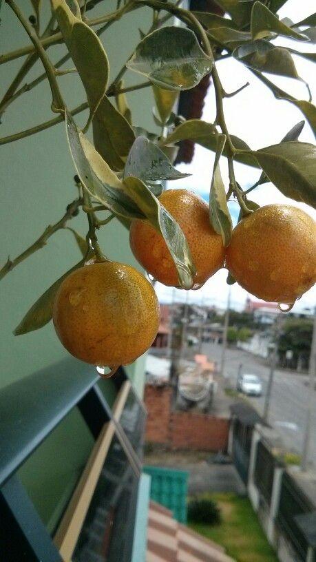 Limon-mandarina