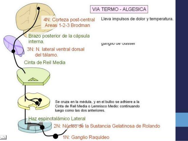 Anatomia y fisiologia del sentido del tacto | tac | Pinterest ...