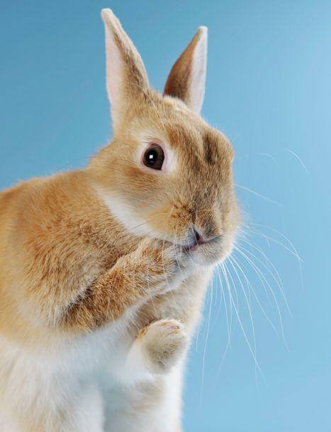 Kurumi 099 Jpg うさぎ 動物 ウサギ