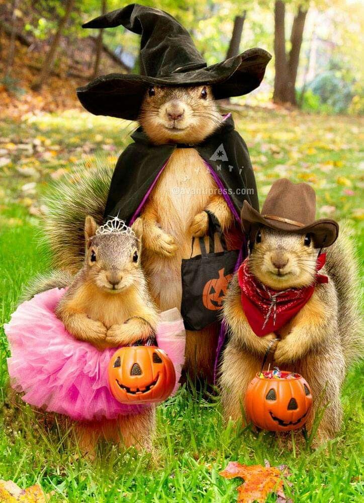 Halloween Squirrels Squirrel pictures, Cute animals