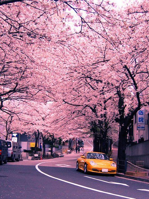 Pin By Aureliana Santos On Pink Cherry Blossom Japan Scenery Scenery Wallpaper