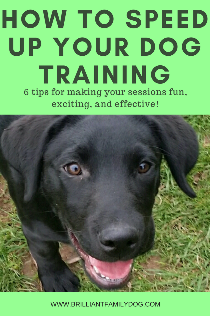 How to speed up your dog training 6 tips for making your