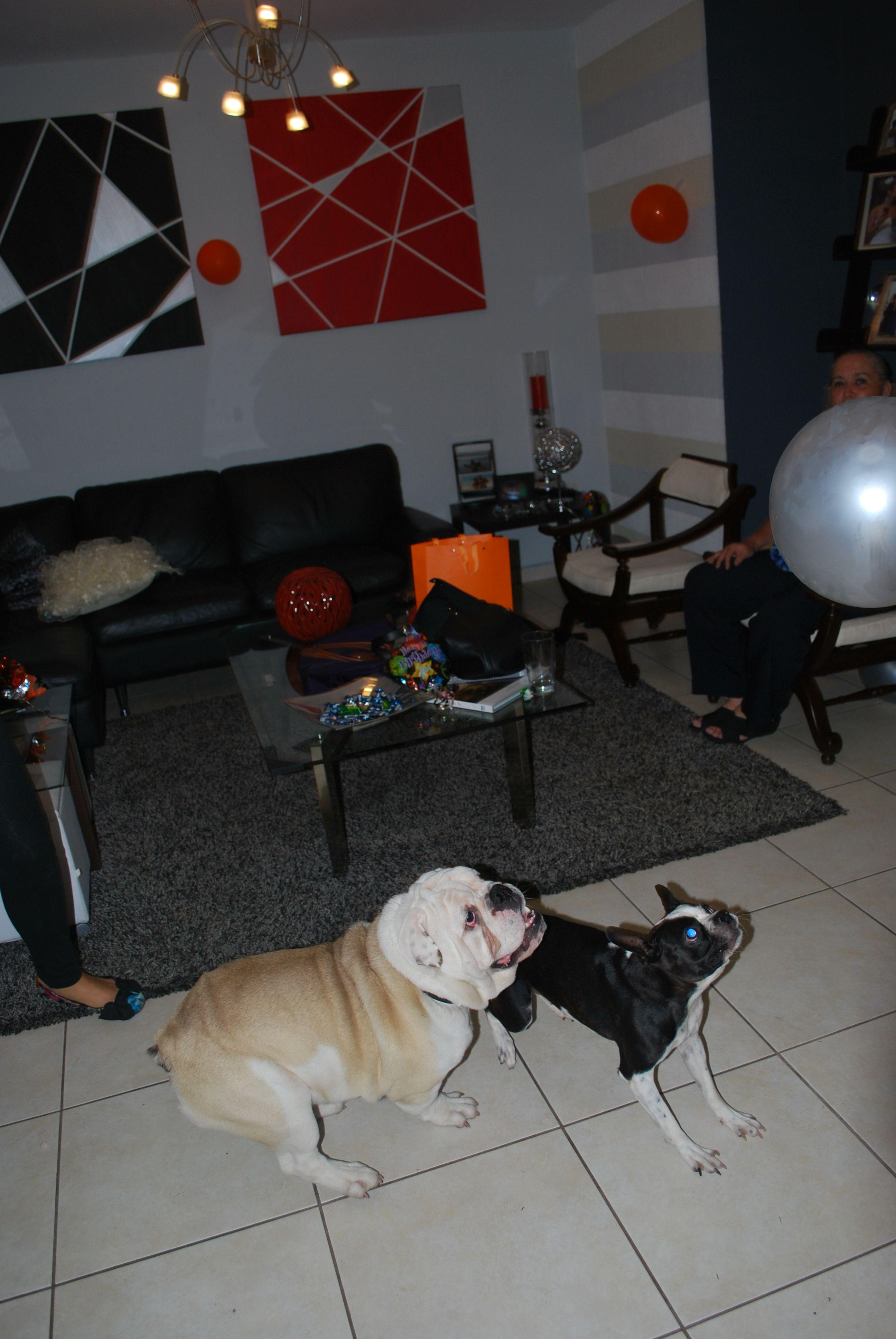 Donatella & Maximus