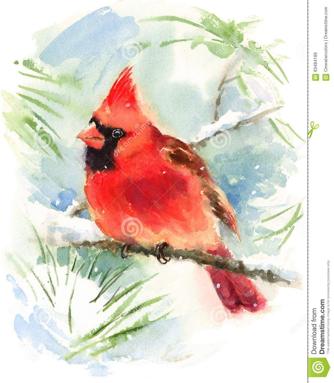 Cardinal Bird Watercolor Winter Illustration Hand Painted - Download From Over 49 Million High Quality Stock Photos, Images, Vectors. Sign up for FREE today. Image: 63484189