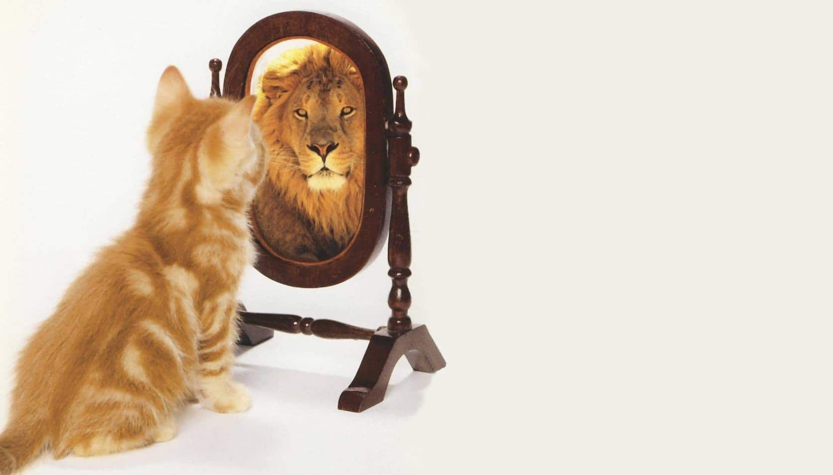 image of kitten looking in a mirror and seeing a lion looking back ...