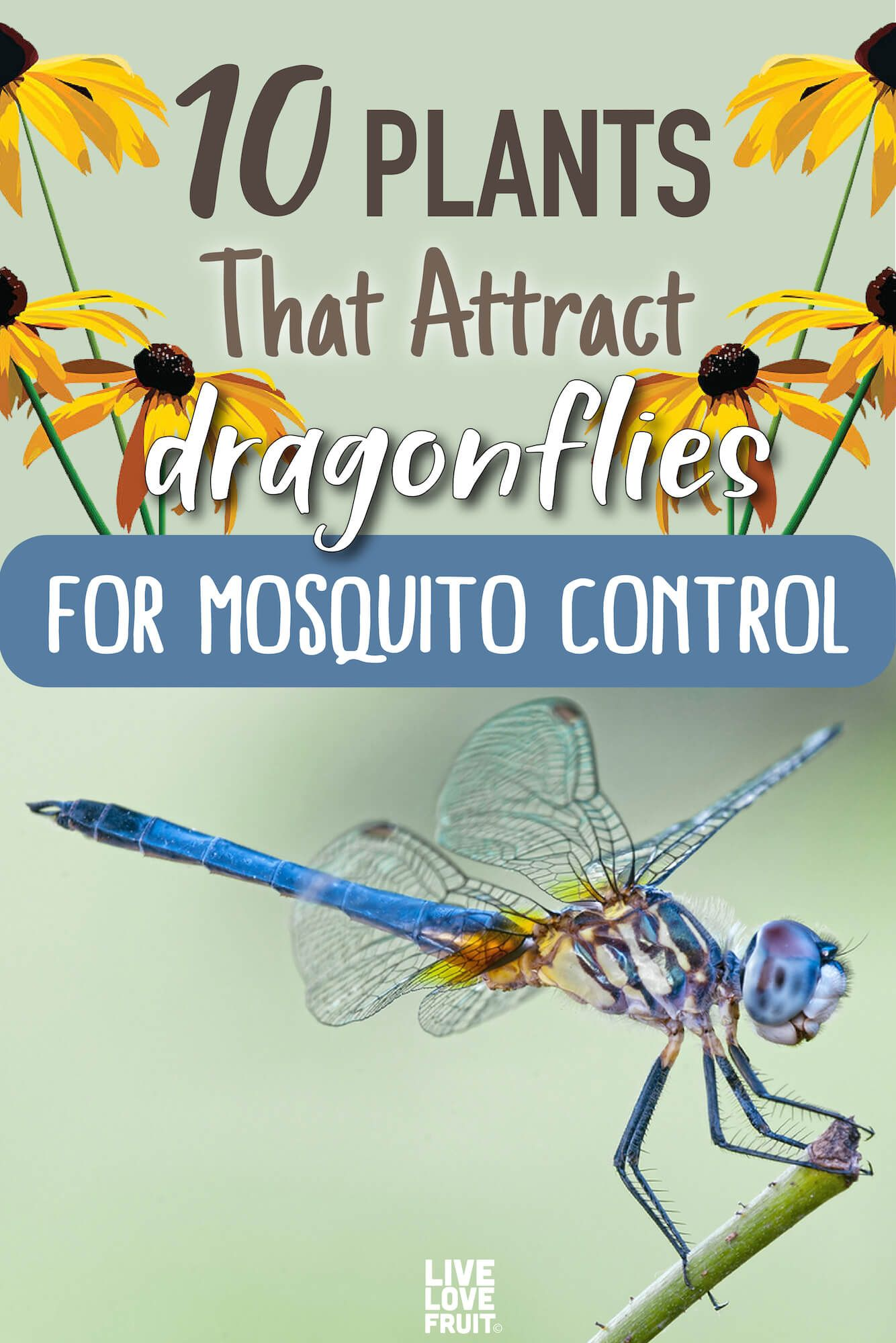 One Dragonfly Can Eat Hundreds of Mosquitoes a Day. Keep These Plants in Your Yard to Attract Dragonflies! #outdoorgardens