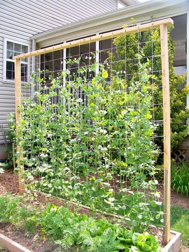 Use These Tips To Grow A Better Organic Garden! Diy
