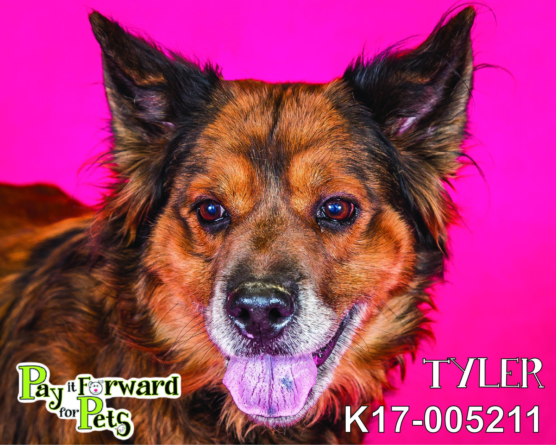 Adopt Tyler On Petfinder Animal Control Collie Dog Collie