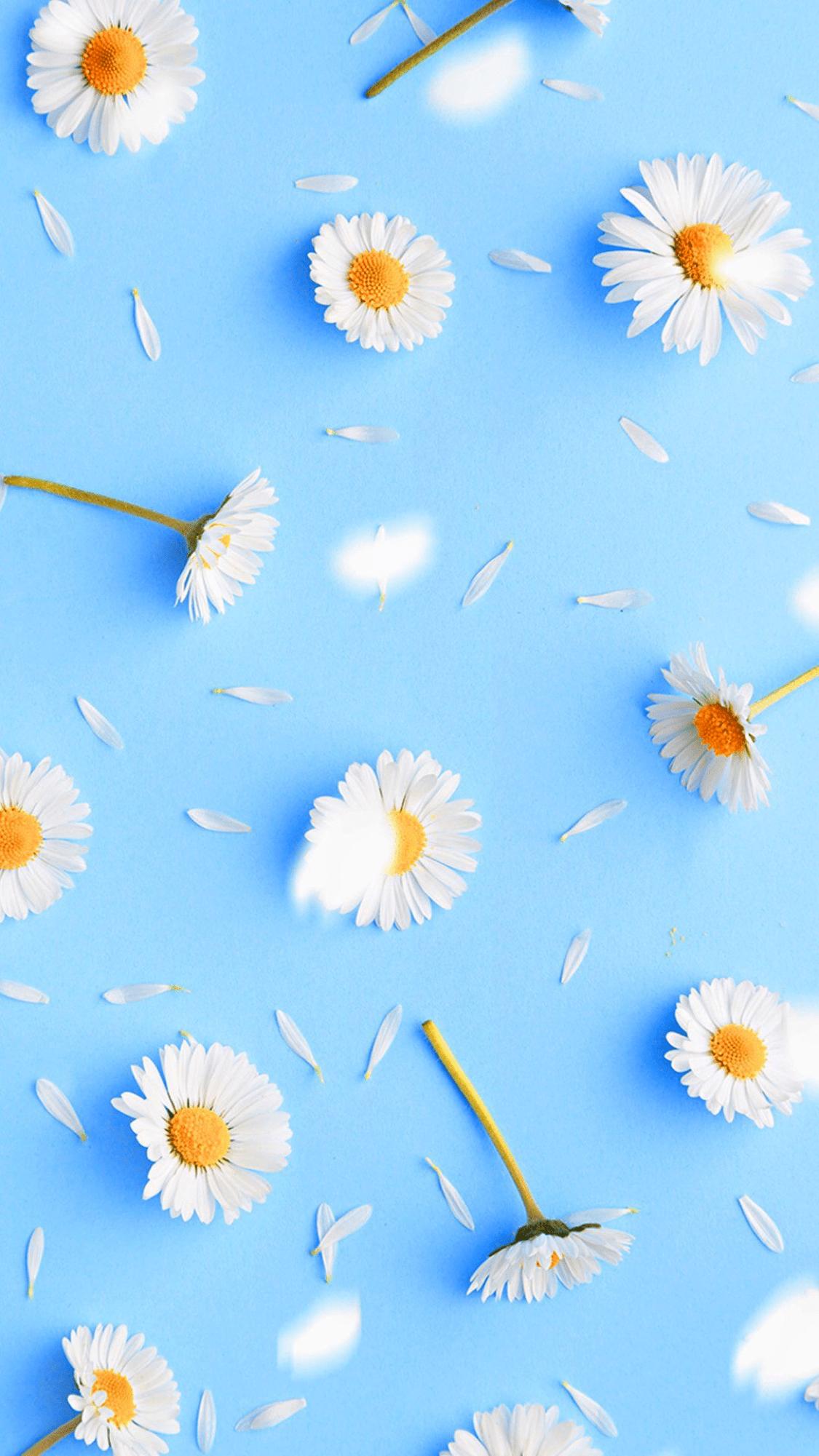 📱 Fond d\'écran cellulaire – Inspiration d\'images de plantes ...