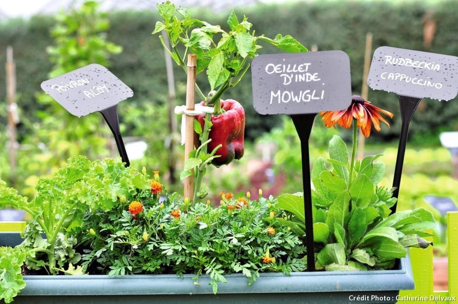 potager sur le balcon les 10 l gumes qui poussent bien. Black Bedroom Furniture Sets. Home Design Ideas