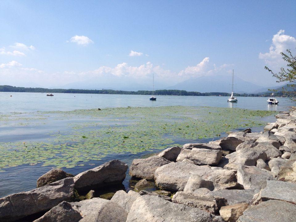 Tappeto di ninfee - Lago di Viverone - Piemonte