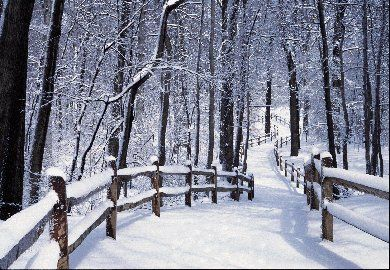 Forest Path In Winter At The New York Botanical Garden Forest