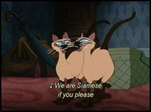 The Siamese Cats From The Lady And The Tramp Siamese Cats
