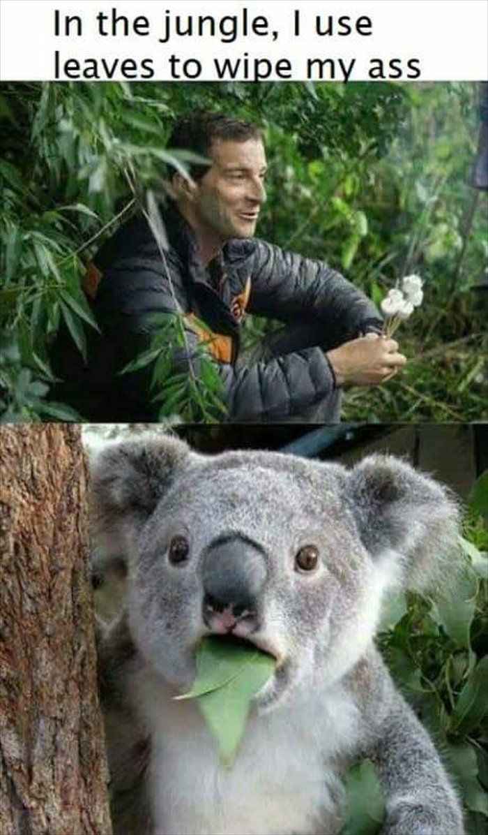 wiping with what now #Pictures http://bit.ly/2wTtJV ...  Funny Koala Memes