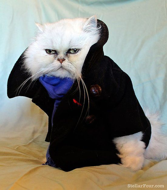 19 Paws Itively Perfect Cat Costumes Benedict Cumberbatch