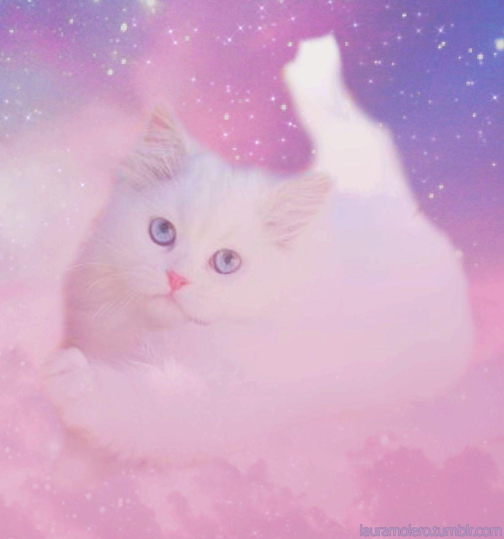 Lauramolero Lovely Cat My Edits Cat Pattern Wallpaper Cats Cute Cats
