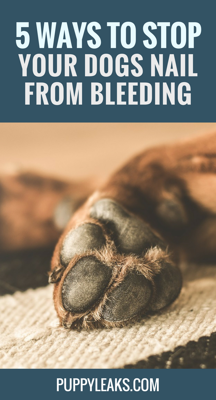 How to stop your dogs nail from bleeding.