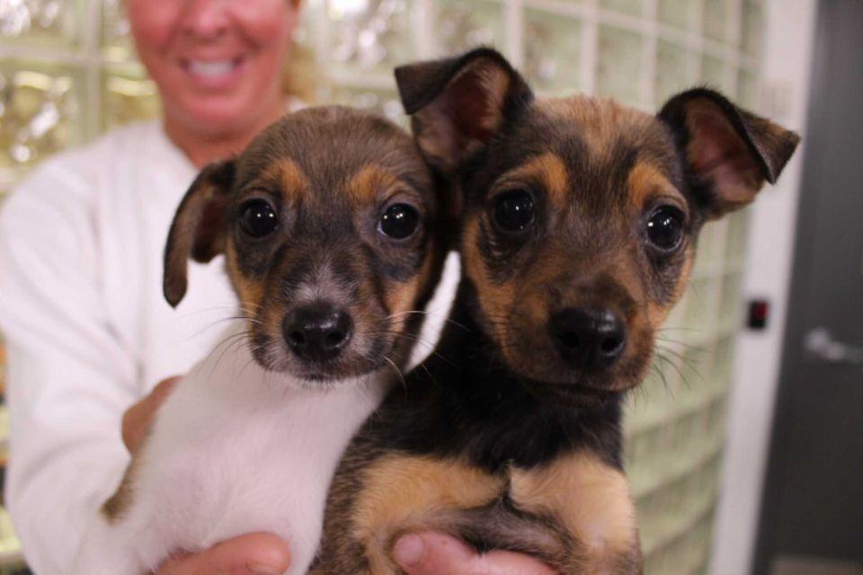 Dog Day Fridays With Images Dogs Dog Days Animal Shelter