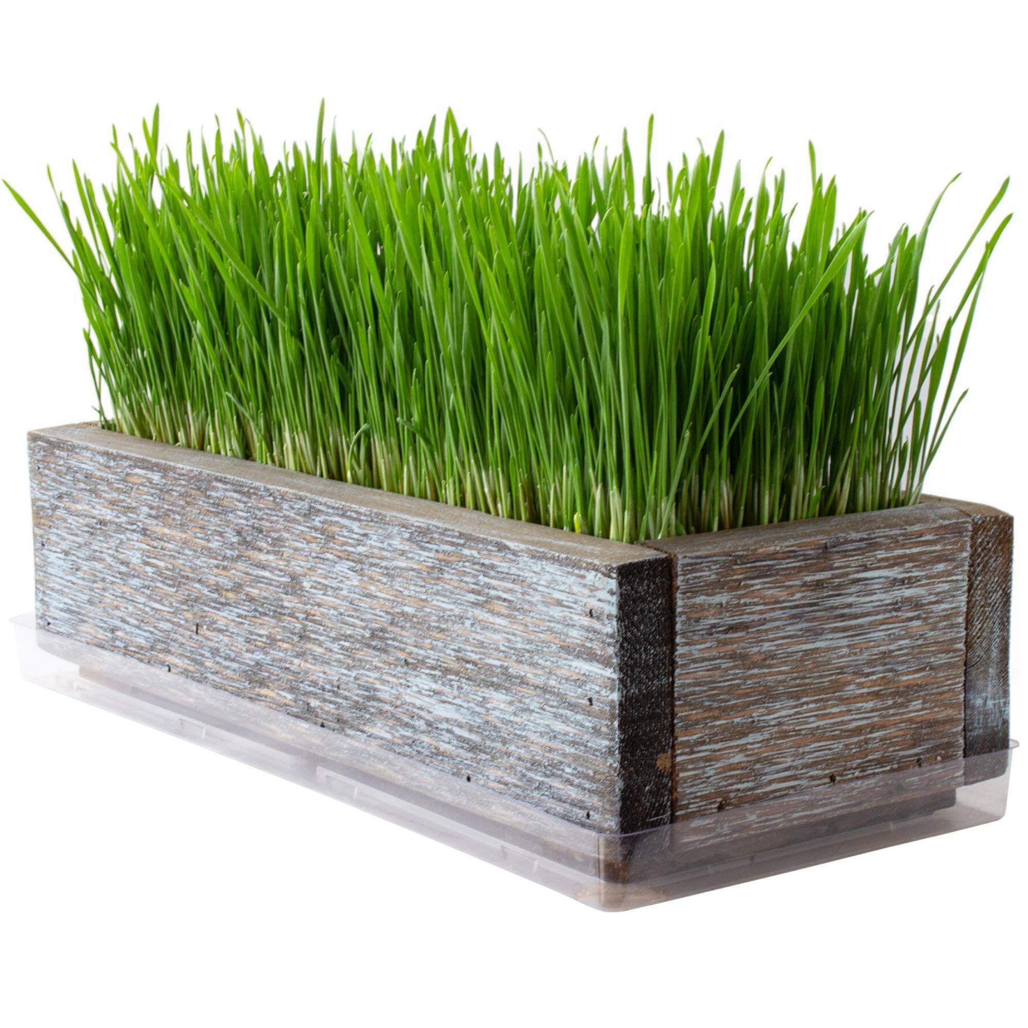 Reclaimed Barnwood Style Planter Wheatgrass Kit Aged