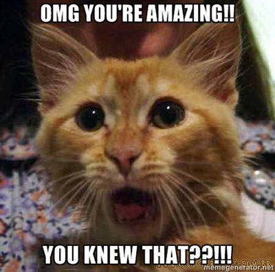 Catch Phrase Of The Day You Re Amazing Lustige Katzenbilder Katzen Memes Seltsame Katzen