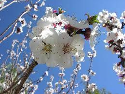 martianmermaid Bloom
