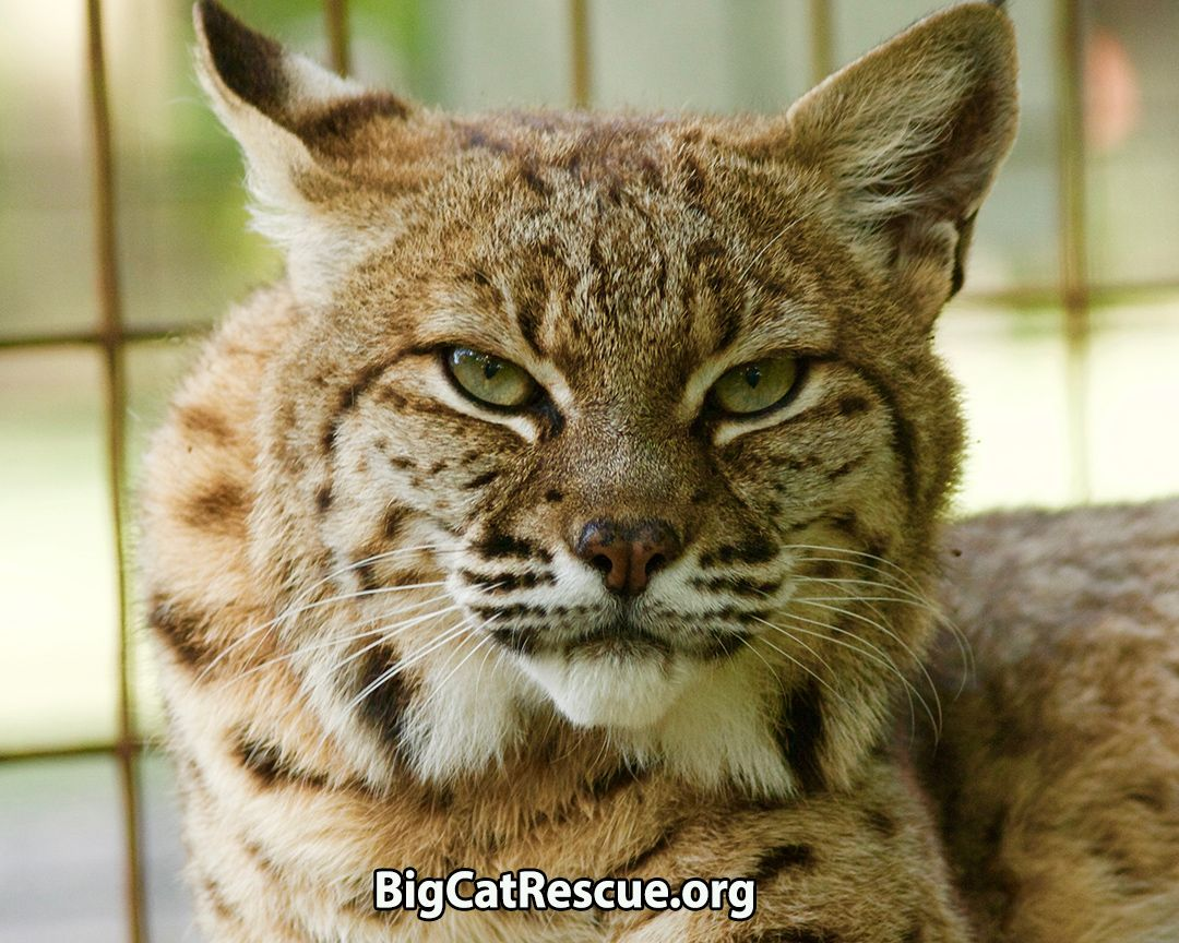 Sentencing Statement (With images) Big cat rescue, Big