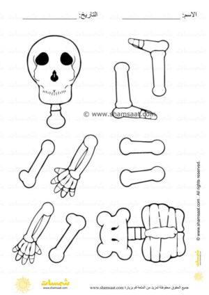 نشاط جسم الانسان ممتع قص ولصق وتركيب الهيكل العظمي للاطفال 1 Character Peace Gesture Fictional Characters