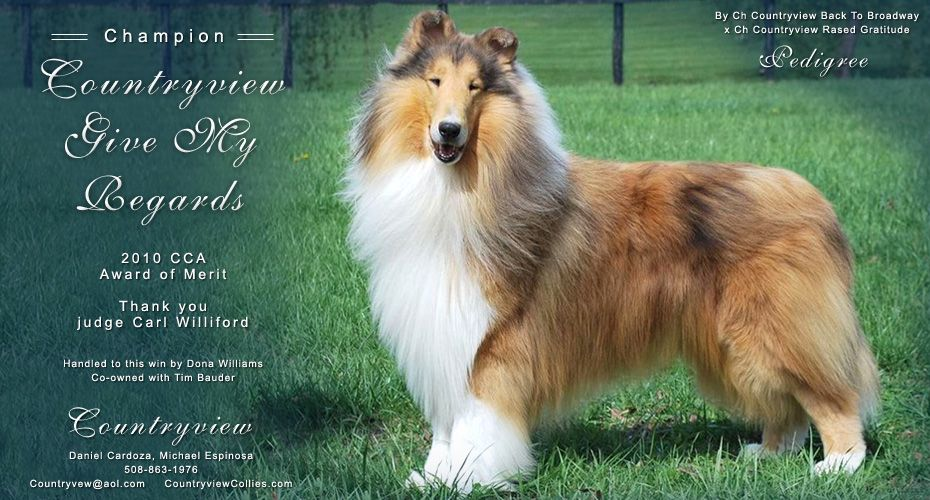 Ch Countryview Give My Regards Rough Collie Collie Kittens And