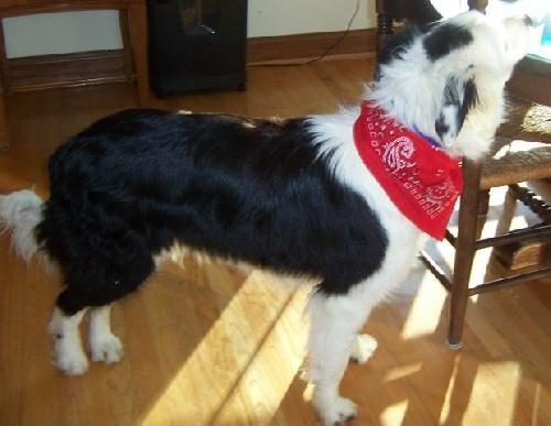 Adopt Jimmy Courtesy Listing Cincinnati Oh On Foster Cat Border Collie Dog Dog Adoption