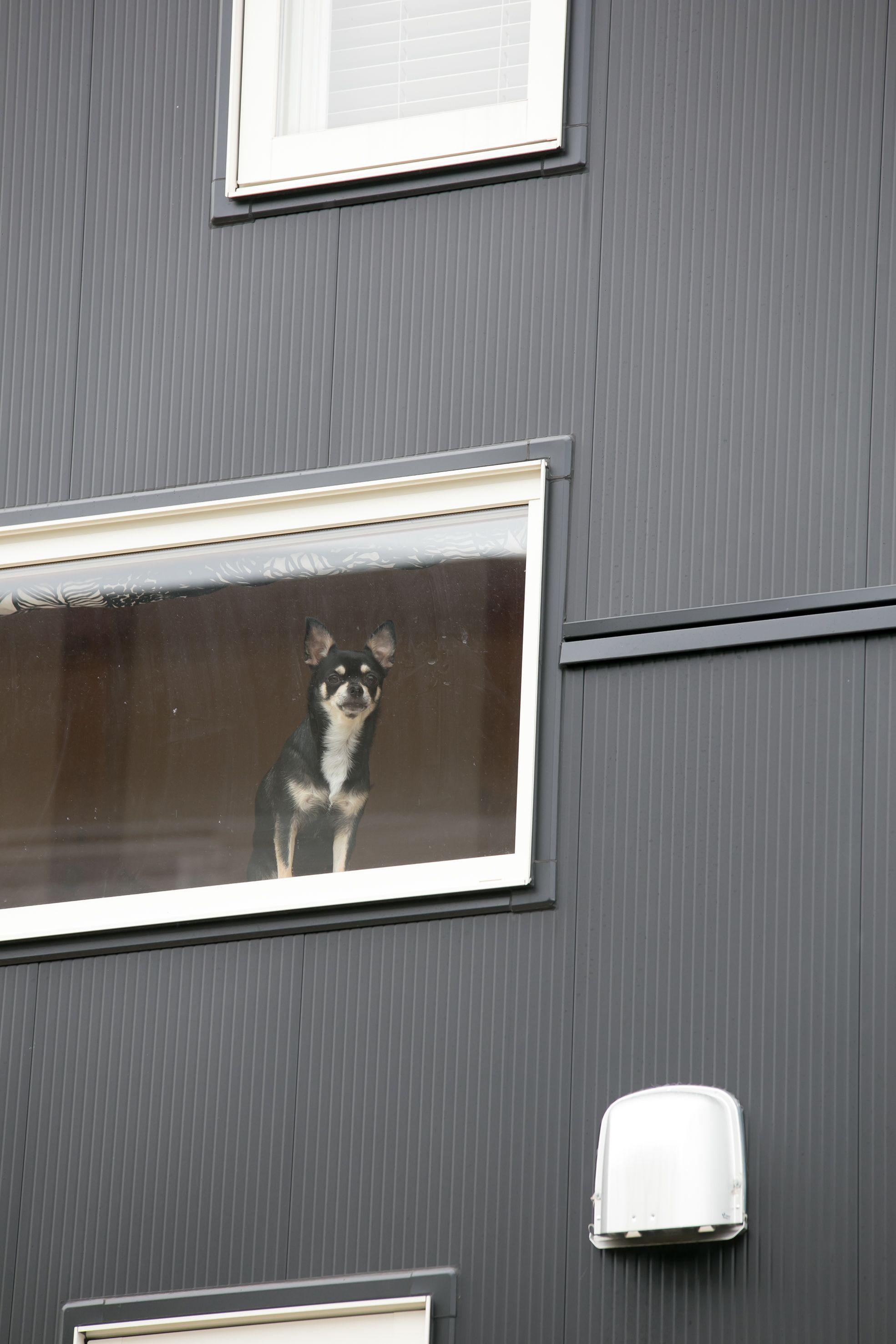 ペットと共に暮らす家 Bino Bino Wave 中塚組 窓 ペット ペット専用 ペット専用窓 ペットのいる暮らし 外観 外壁 家 おしゃれな 平屋 おしゃれな家