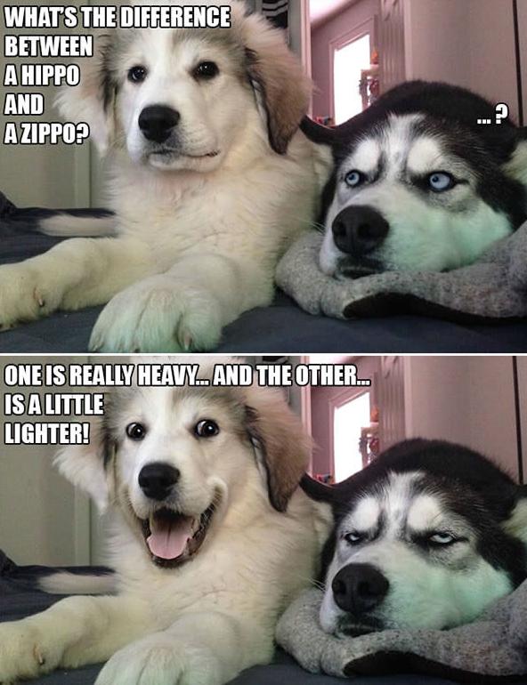 343e70c6bd57b360e1454d59e3a92a2f 10 punny dog jokes that this husky is sick of hearing dog jokes
