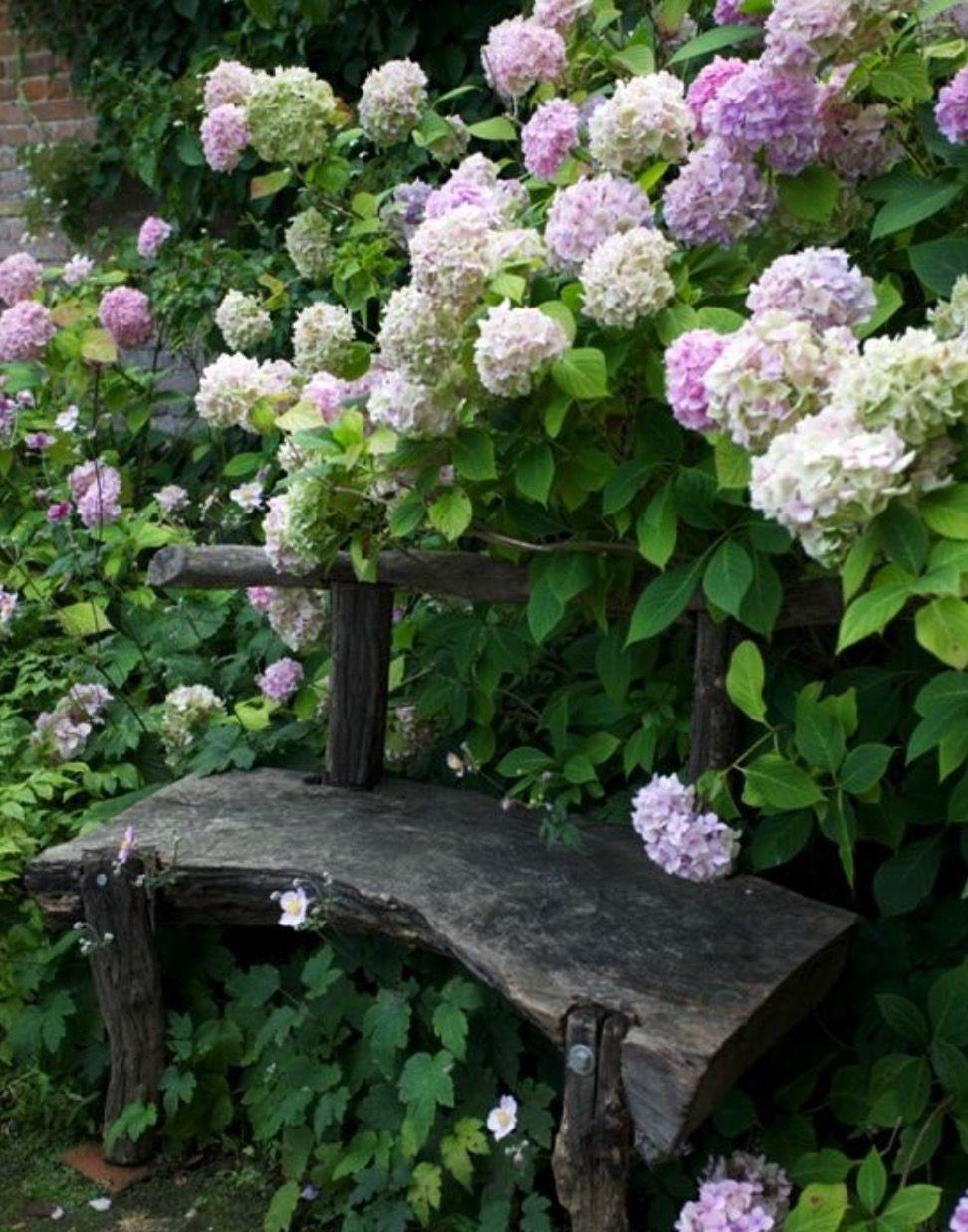 Pin by janet gorman on garden pinterest hydrangea gardens and