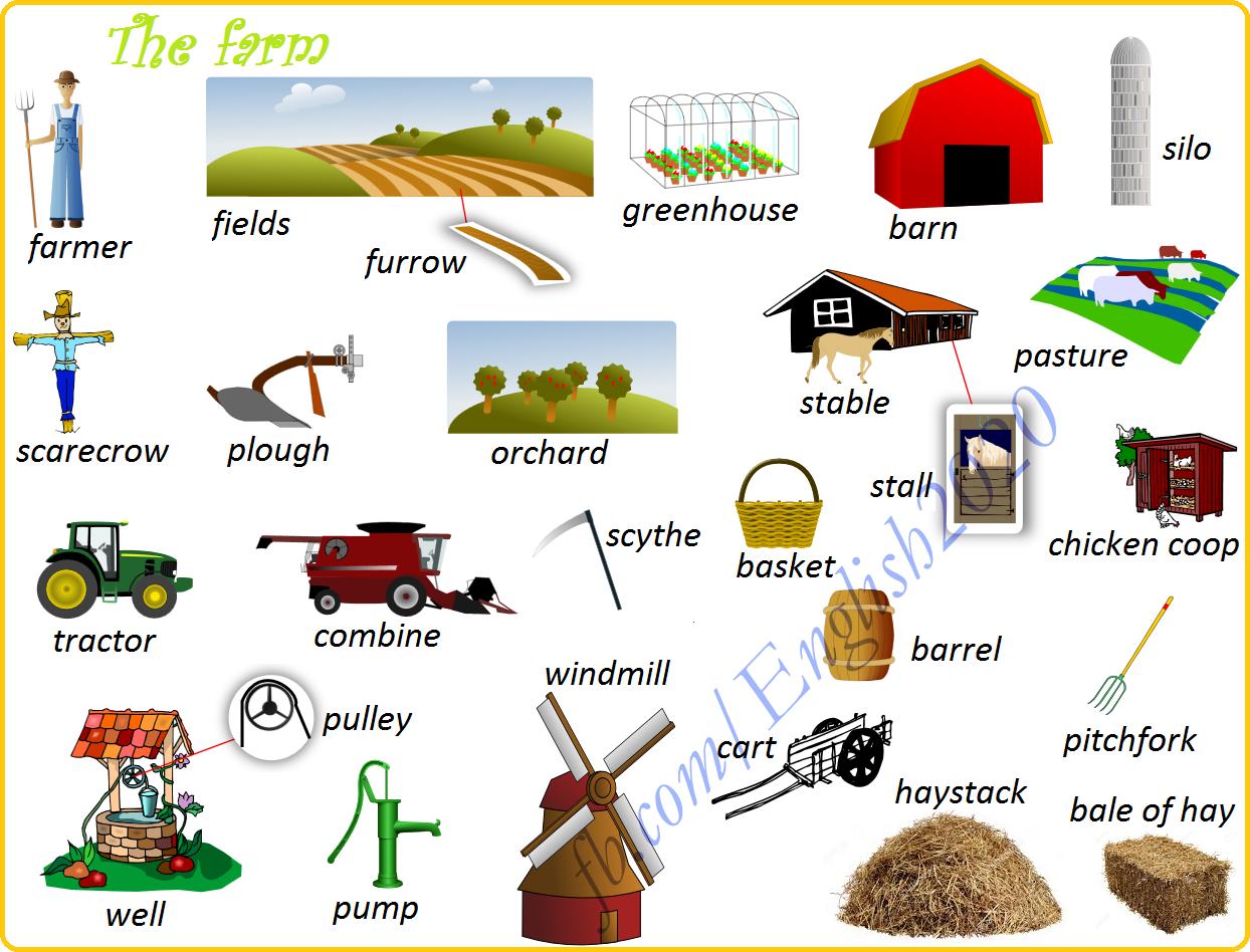 Vocabulary The Farm