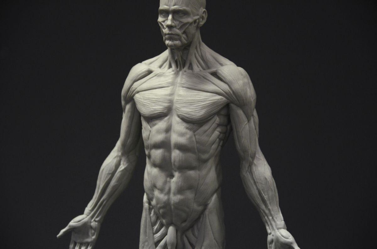 Atractivo Fundido Anatomía Grises Ornamento - Imágenes de Anatomía ...