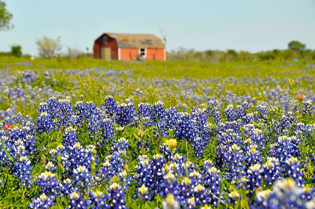 Texas, the Lone Star State, is the second largest as well as the second most populated state in the US. It also holds some of the most beautiful spots in the world. Beautiful sights, lovely people and amazing cities make this a must visit destination. Be amazed by these awesome pictures and places t