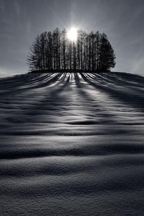 Biei Hokkaido Japan Photography Black And White Landscape White Photography Winter Landscape Shadow