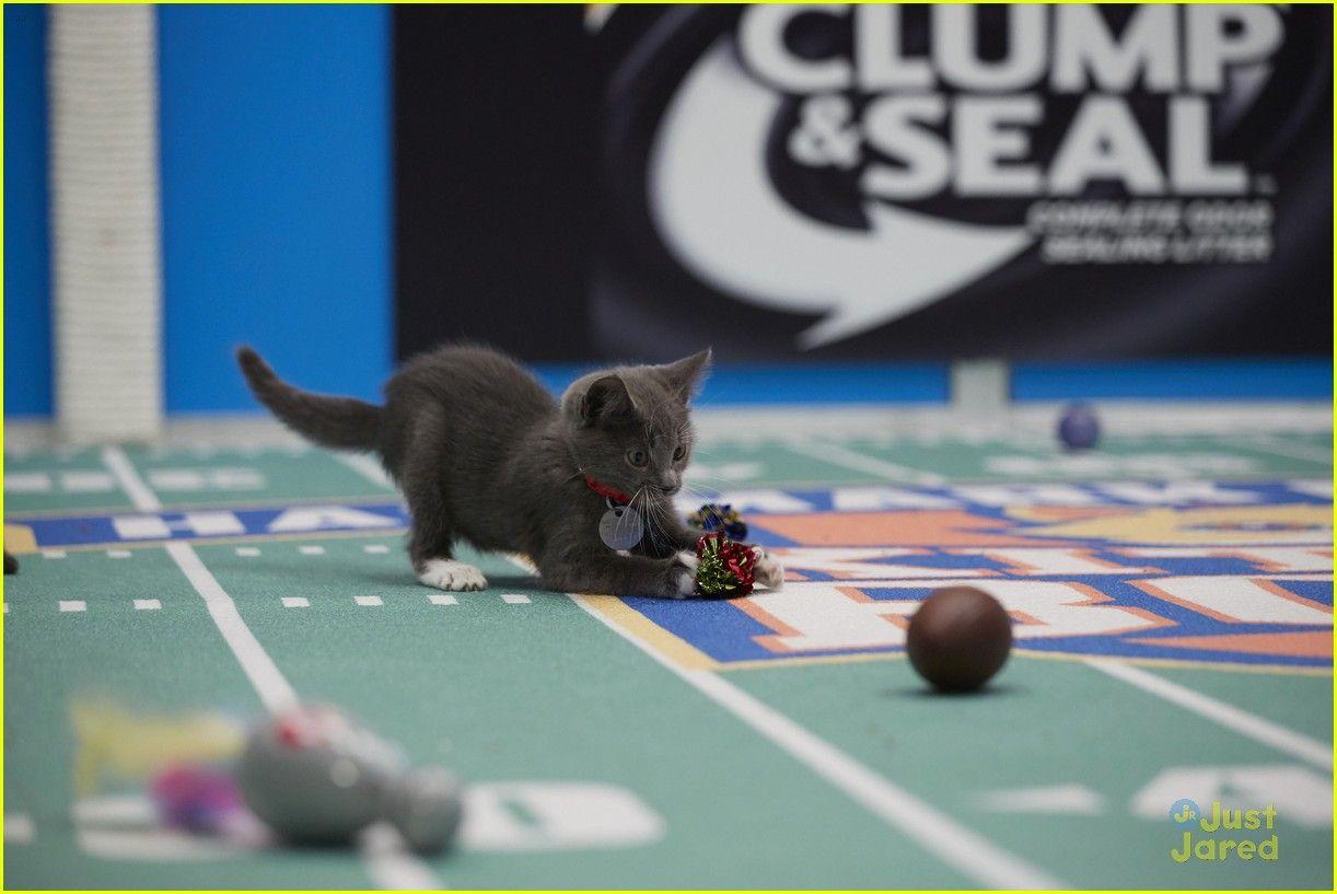 Kitten Bowl Hallmark Super Bowl Sunday 26 Kitten Bowls Kitten Super Bowl Sunday