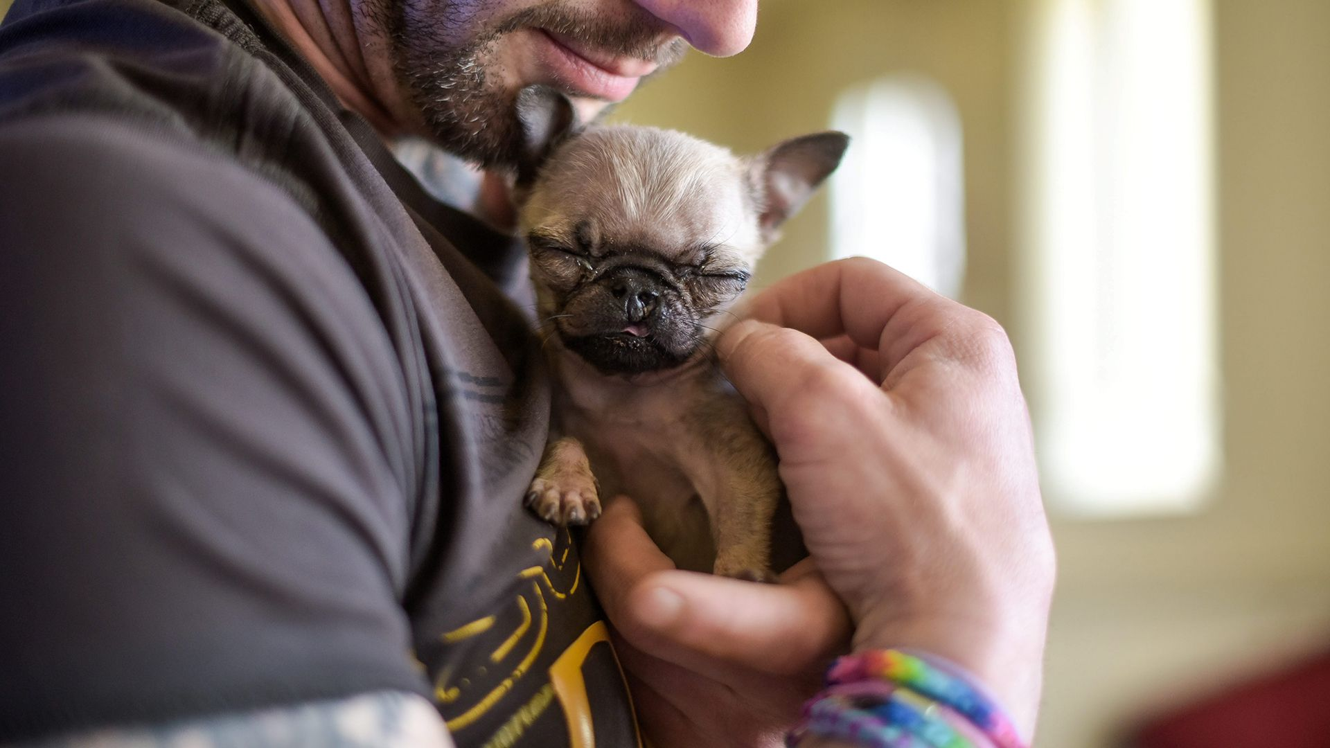 Meet Pip Who Just May Be The Smallest Dog In The World Small